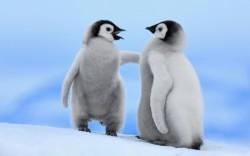 два маленьких пингвина