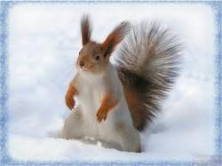 белка на снегу