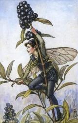 эльф от Сесиль Мери Баркер